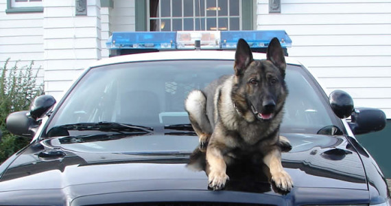 San Ramon Police Department K-9 Unit